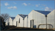 農業 / ハウス栽培